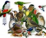 Cuba enfrenta contrabando de aves y otras especies naturales